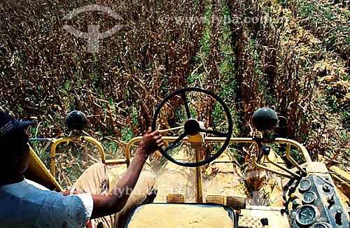 Detalhe de homem conduzindo máquina para colheita mecanizada em plantação de milho - PR - Brasil  - Paraná - Brasil