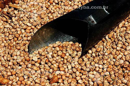 Agricultura - Grãos de Soja e caneca de medição