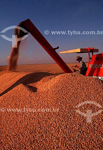 Colheita mecanizada de trigo - Guaíra - SP - Brasil  - Guaíra - São Paulo - Brasil