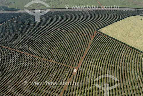 Vista aérea de plantação de Laranja entre Piracicaba e Limeira - Agricultura - SP - Setembro de 2007  - Piracicaba - São Paulo - Brasil