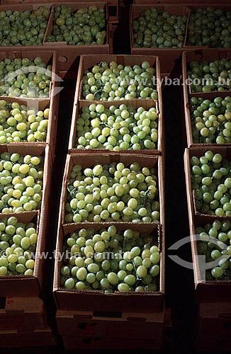 Uvas brancas embaladas em caixas de papelão - estudo de embalagens da Embrapa - Zona Oeste - Rio de Janeiro - RJ - Brasil  - Rio de Janeiro - Rio de Janeiro - Brasil