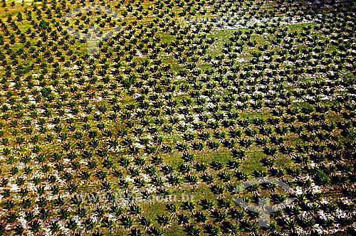 Coqueiral, Plantação de cocos - Espírito Santo - Nov.2006.  - Coqueiral - Espírito Santo - Brasil