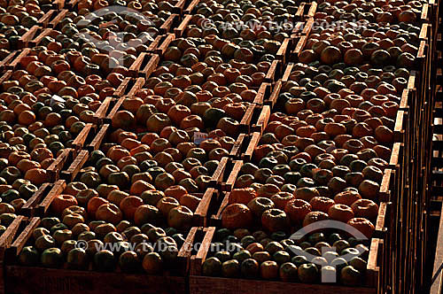 Tangerinas armazenadas em caixotes - Brasil