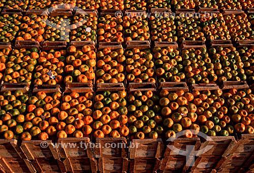 Tangerinas armazenadas em caixotes - Limeira - SP - Brasil  - Limeira - São Paulo - Brasil