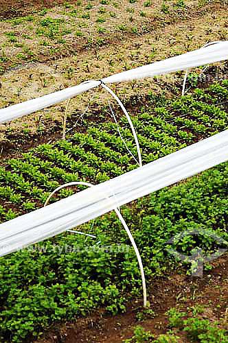 Horta Orgânica - São José do Vale do Rio Preto - Rio de Janeiro - BrasilData: 24/11/2006