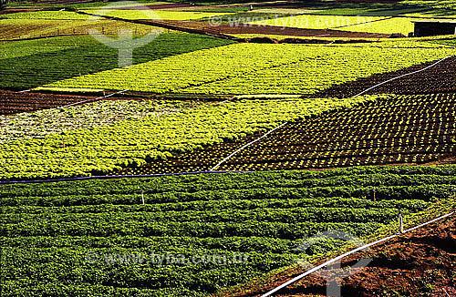 Plantação de hortaliças - Teresópolis - RJ - Brasil - Data: 2008
