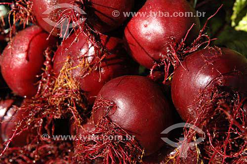Beterrabas - Produção de alimentos orgânicos - São José do Vale do Rio Preto - Rio de JaneiroData: 24/11/2006