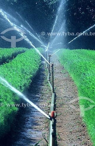 Irrigação de horticultura - Brasil