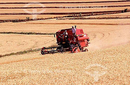 Colheita mecanizada em plantação de trigo - Arapongas - PR - Brasil / Data: 1995
