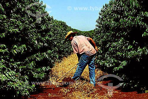 Homem trabalhando com enxada em plantação de café - Cajuru - SP - Brasil  - Cajuru - São Paulo - Brasil