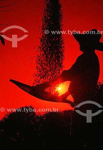 Silhueta de homem trabalhando grãos de café em peneira / Local: Minas Gerais - MG - Brasil / Data: 1996