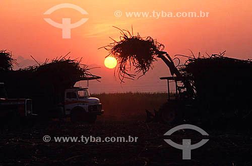 Colheita mecanizada em plantação de cana de açúcar (canavial) no pôr-do-sol  - Campos dos Goytacazes - Rio de Janeiro - Brasil