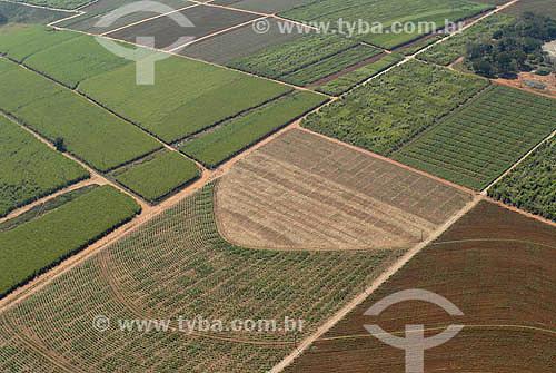 Vista aérea de plantação de Cana de Açúcar entre Piracicaba e Limeira - Agricultura - SP - Setembro de 2007  - Piracicaba - São Paulo - Brasil