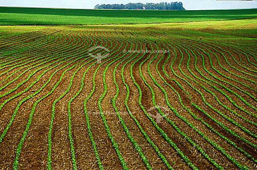 Plantação nova de algodão - Pedra Preta - MT - Brasil. Data: 2001