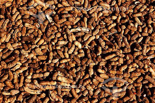 Detalhe de amendoim em casca - Brasil