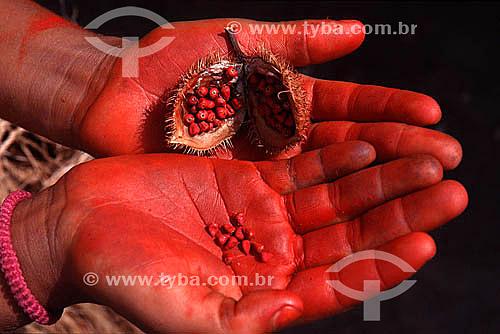 Detalhe de mãos mostrando o Urucum - fruto encontrado na Amazônia, usado pelos índios para pintar o corpo, atualmente usado na indústria de cosméticos - Brasil  - Bahia - Brasil