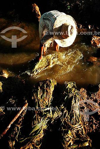 Assunto: Homem trabalhando com sisal / Local: Minas Gerais (MG) - Brasil / Data: 1995