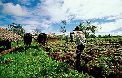 Homem cultivando a terra com arado puxado por bois - MG - Brasil / Data: 08/1999