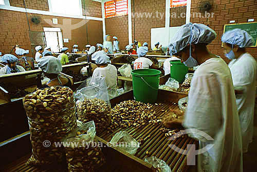 Processamento de castanhas na COPAEB (Cooperativa Agroextrativista de Brasiléia), município de Brasiléia - Acre(maio de 2001)  - Brasiléia - Acre - Brasil
