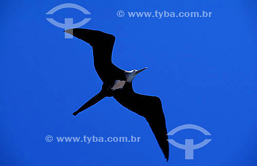 Vôo de pássaro - Caravela - PARNA de Abrolhos - BA - Brasil  - Caravelas - Bahia - Brasil