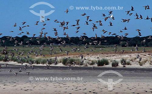 Pássaros sobrevoam a praia do Cassino - RS - Brasil  - Rio Grande do Sul - Brasil