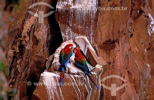 (Ara chloroptera)  Arara-vermelha (casal) no Buraco das Araras, perto de Jardim - Mato Grosso do Sul - Brasil  - Mato Grosso do Sul - Brasil