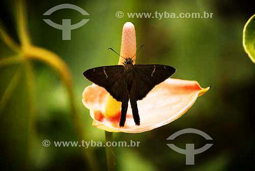 Mariposa em flôr