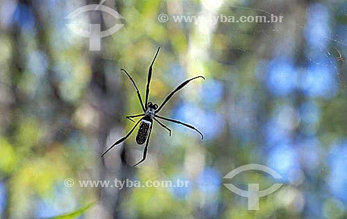 Aranha
