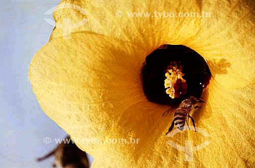 Abelha numa flor