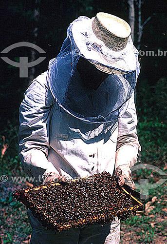 Homem no apiário, abelhas