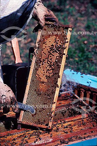 Homem no apiário manipulando colméia de abelha