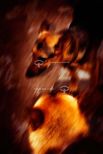Cachorros da raça pastor alemão