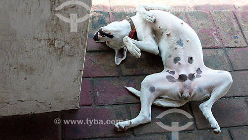 Cadela - Olinda - PE - Brasil - Set./2007  - Olinda - Pernambuco - Brasil