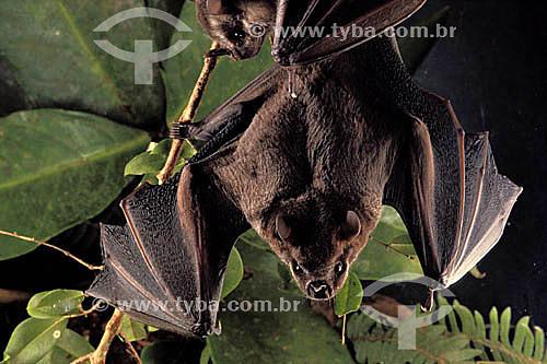 Morcego / Data: 1995