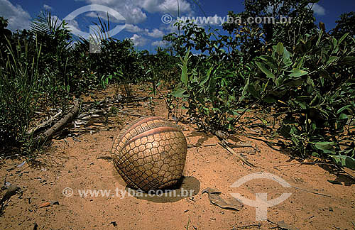 Tatu-bola (Tolypeutes tricinctus) enrolado - Cerrado - Piauí - Brazil  - Piauí - Brasil