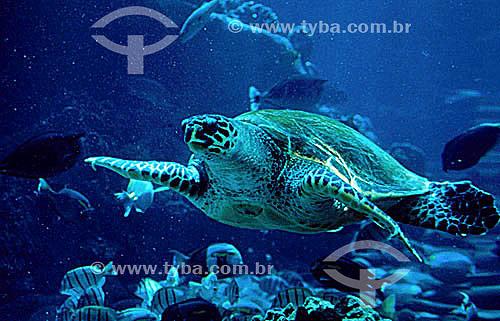 Tartaruga marinha no fundo do mar