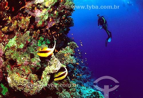 Assunto: Mergulhador no Mar Vermelho / Local: Egito - África / Data: 05/2002