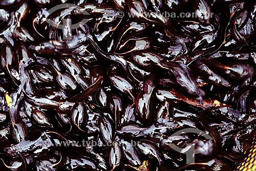 Girino - Larva de sapo ou rã