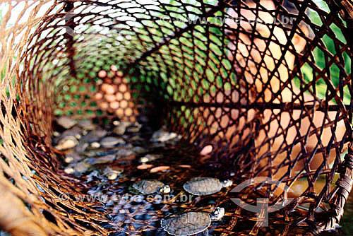Tartarugas em cesto e silhueta de homem - Amazônia - Brasil