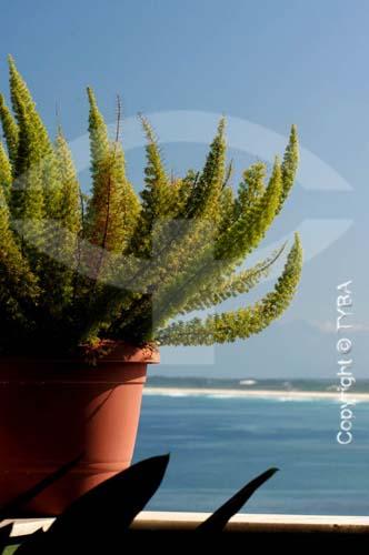 Vaso com planta à beira mar - Pedra de Guaratiba - Rio de Janeiro - RJ - Brasil  - Rio de Janeiro - Rio de Janeiro - Brasil