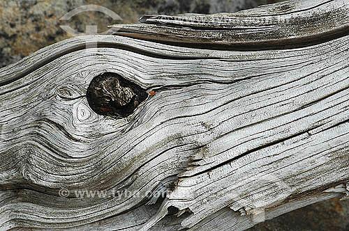 Detalhe de troco de árvore  cortado - Grafismo