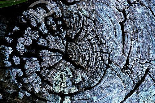 Detalhe de tronco de árvore