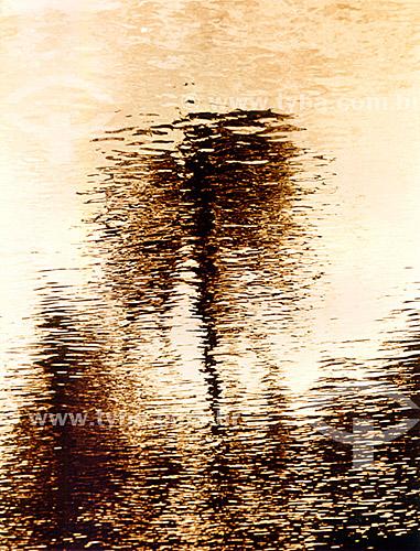 Efeito visual: árvore refletida na água