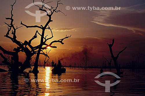 Ambiental - Árvore sob o pôr do sol - Inundação da construção da Hidrelétrica Tucuruí - PA - Brasil  - Tucuruí - Pará - Brasil