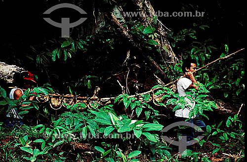 Ambiental - Homens resgatando animais (tartarugas ou cágados)) na inundação da construção da Hidroelétrica Balbina - AM - Brasil  - Presidente Figueiredo - Amazonas - Brasil