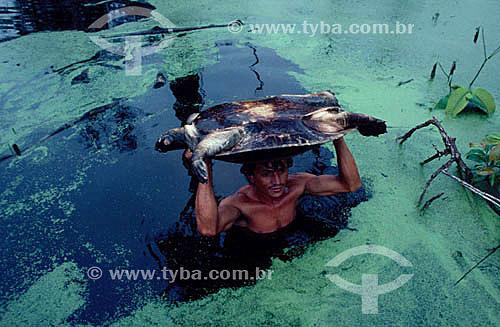 Assunto: Homem resgatando animais (tartarugas) na inundação da construção da Hidroelétrica Balbina / Local: Amazonas - Brasil / Data: Década de 80