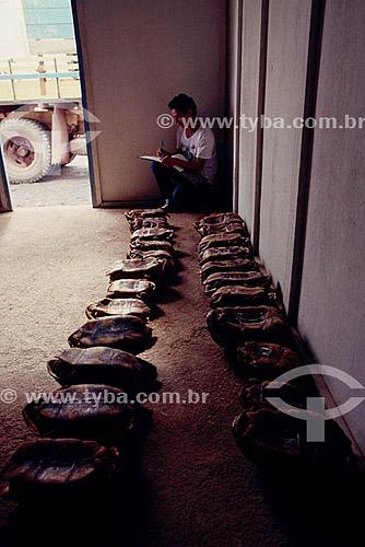 Ambiental - Resgate de animais(tartarugas ou cágados) na inundação da construção da Hidrelétrica Balbina - AM - Brasil  - Presidente Figueiredo - Amazonas - Brasil
