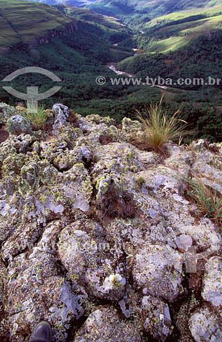 Detalhe de ecossistema com vegetação rupestre, nos altos ruiniformes do Vale do Guartelá percebendo-se a paisagem do canyon do Rio Tibaji - PR - Brasil  - Paraná - Brasil