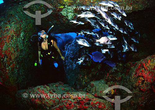Mergulhadora e cardúme de peixes em Fernando de Noronha - PE - Brasil - 2007  - Fernando de Noronha - Pernambuco - Brasil