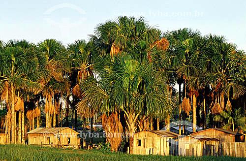 Habitações tradicionais e buritizeiros (Mauritia flexuosa) - Acre - maio de 2001  - Acre - Brasil